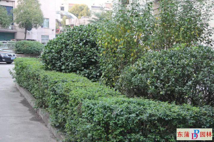 园林绿化 作品展示  湘潭县信用联社
